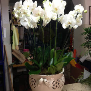piante_floral_1148